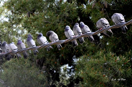 Gambar burung, jenis burung, foto burung, kicau, burung kicauan, download gambar, download suara burung 1