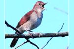 Musik relaksasi suara merdu 14 burung di tengah gemericikair