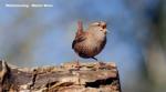 Nikmati nih, suara 18 burung dikompilasi musik klasik dan gemericikair