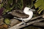 Suara-suara burung yang terancam punah bagian1