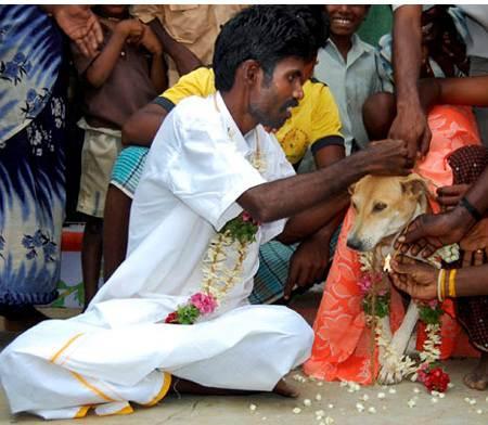 marry_a_dog_Kumar