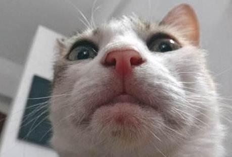 Lucunya Kucing Kucing Ini Berfoto Selfie Si Momot
