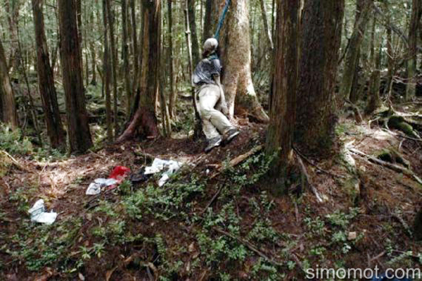 Mengulas Hutan Kematian Dan Misterius Aokigahara