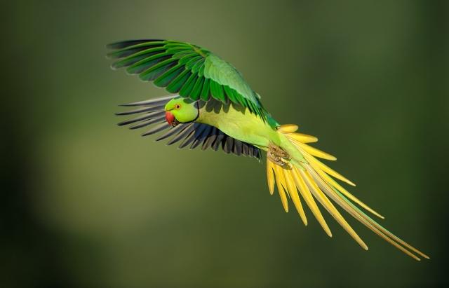 13 Wallpaper Burung Karya Pemenang Kontes Foto Internasional Bird As Art Laman 3 Si Momot