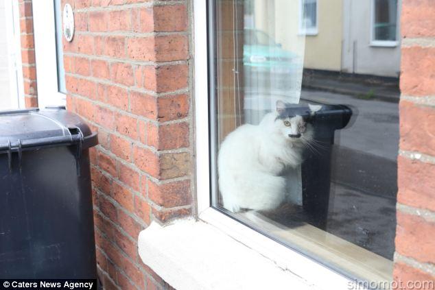 kucing mirip Hitler