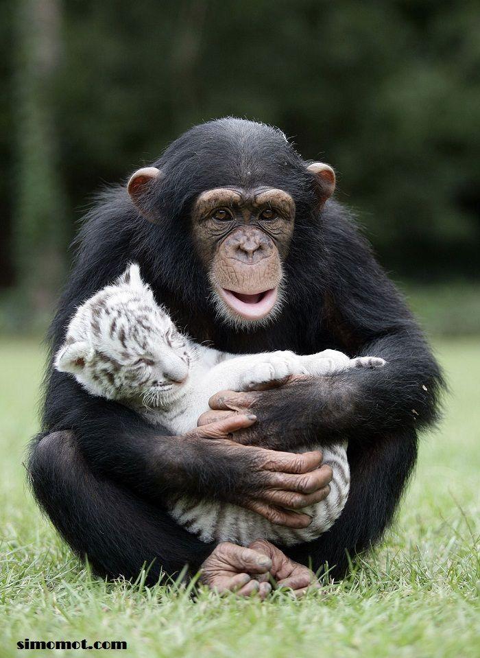 Foto persahabatan antar hewan 1 | Si MomoT