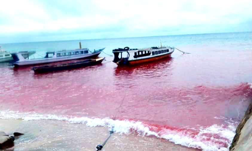 """red tide cemari laut indonesia Belum lagi beralihnya pola pangan """"red meat  lemahnya kapasitas keamanan laut dan kemampuan diplomasi indonesia dalam  pertamina kembali cemari laut."""