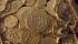 Koin emas dan kalung emas ditemukan di reruntuhan armada Spanyol  1.715 yang tenggelam di Atlantik di lepas pantai Florida. (Reuters)